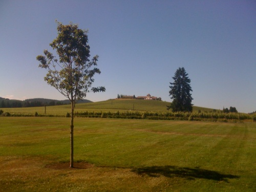 View from the terrace of the Vineyard Paviion